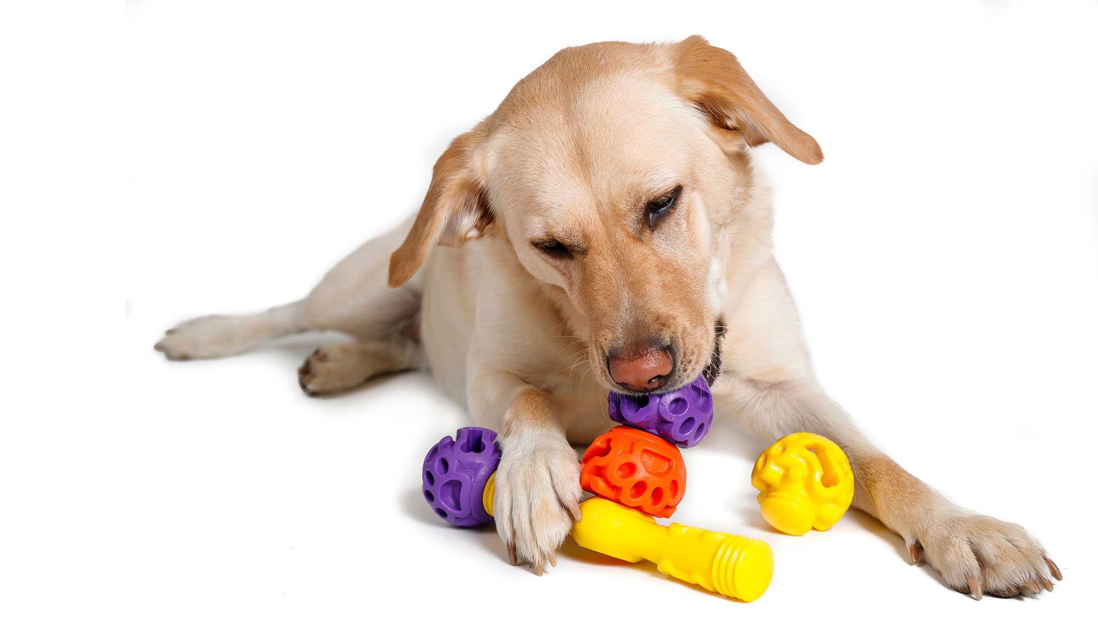 K9 Connectables - Dog toys -1